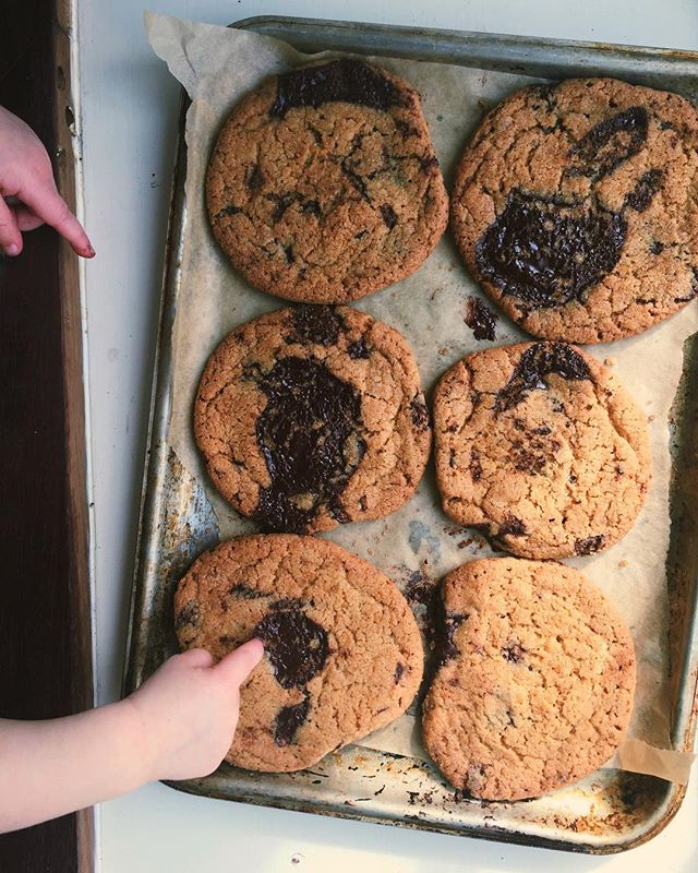 Trialling chocolate chip cookies with an impatient helper.