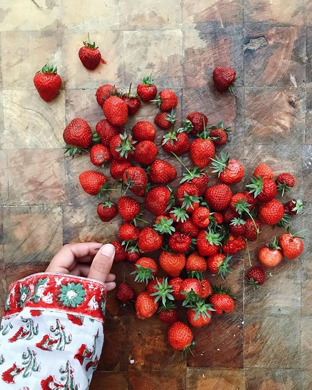 Last haul of strawberries from the garden @savannahlambis